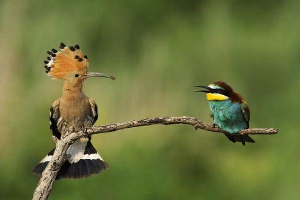 Birdspotting in Cyprus & Bird checklist