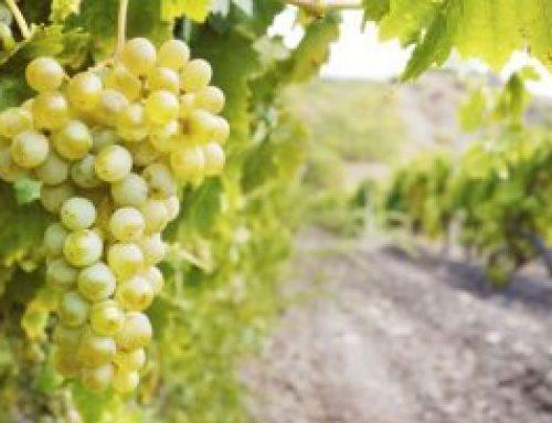 Wine Tasting at Crossroad Cava, Paphos
